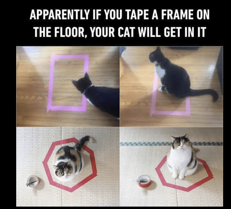 meme of cats that are sitting in a shape made from tape on the floor