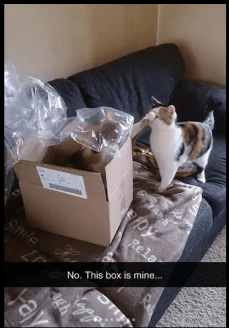 meme of a cat standing next to a cardboard bow and getting hit with a piece of tape from the box