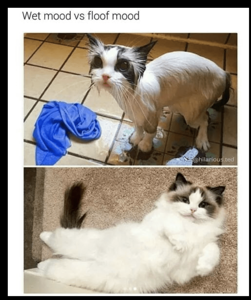 meme of a cat wet when it's fur is wet versus having fluffy fur