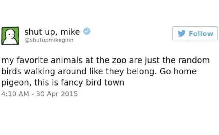 "Tweet that reads, ""My favorite animals at the zoo are just the random birds walking around like they belong. Go home pigeon, this is fancy bird town"""