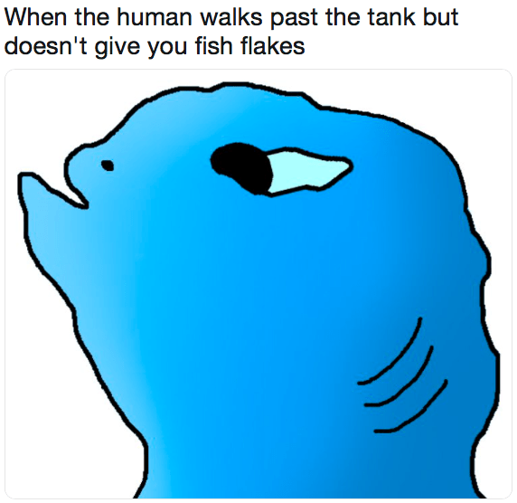 meme about how fish react to not being fed every time a human passes by their tank