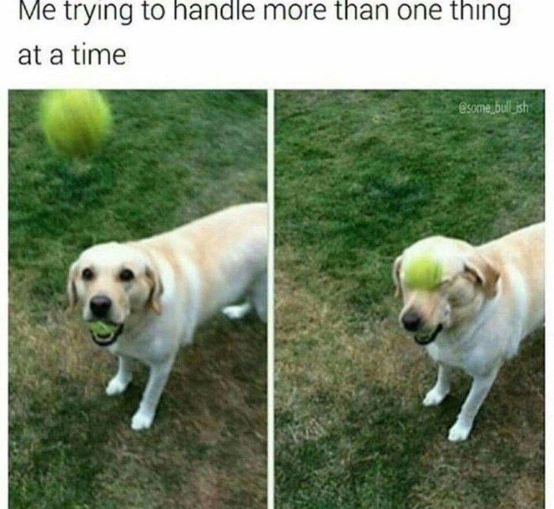 pictures of dog holding tennis ball in mouth and getting hit by the head with another ball as a representation of trying to handle more than one thing