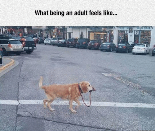 picture of dog taking itself out for a walk as representation of what being an adult feels like