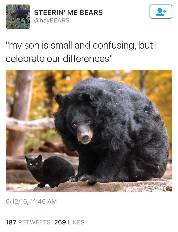 picture of black bear who has adopted black cat as its son and accepts it despite their differences