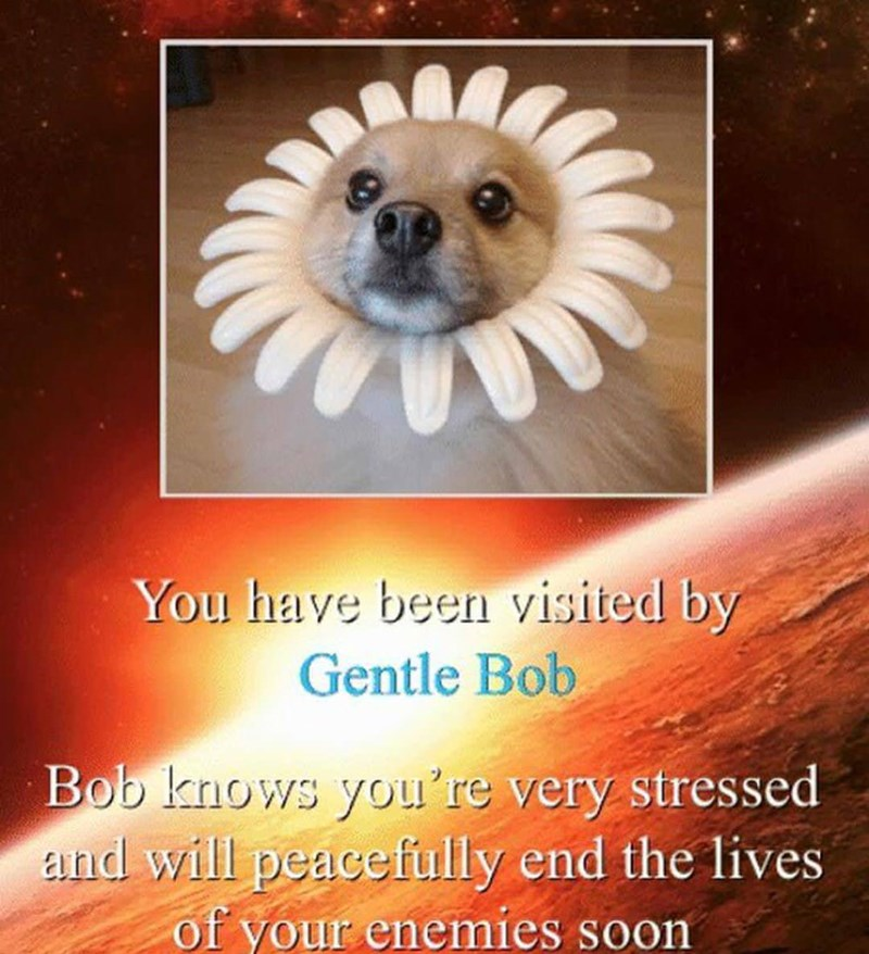"""gentle bob"" meme about dog in flower collar that will kill your enemies"