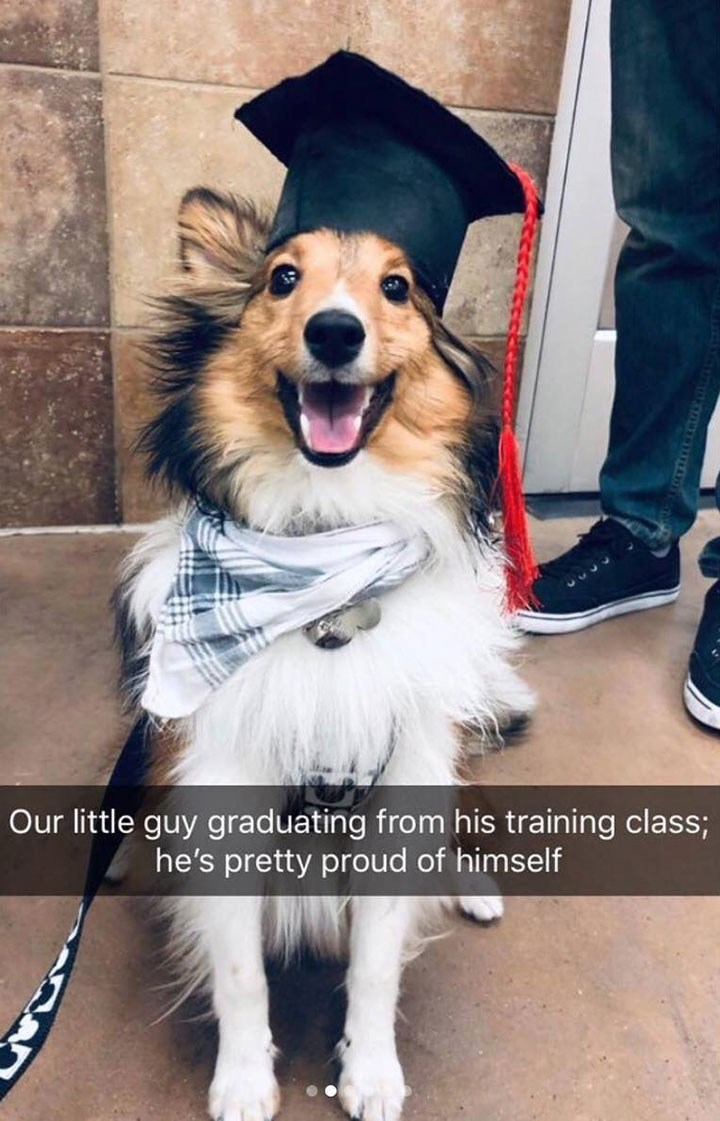 funny snapchat of dog wearing square academic cap on the day it graduates from training class