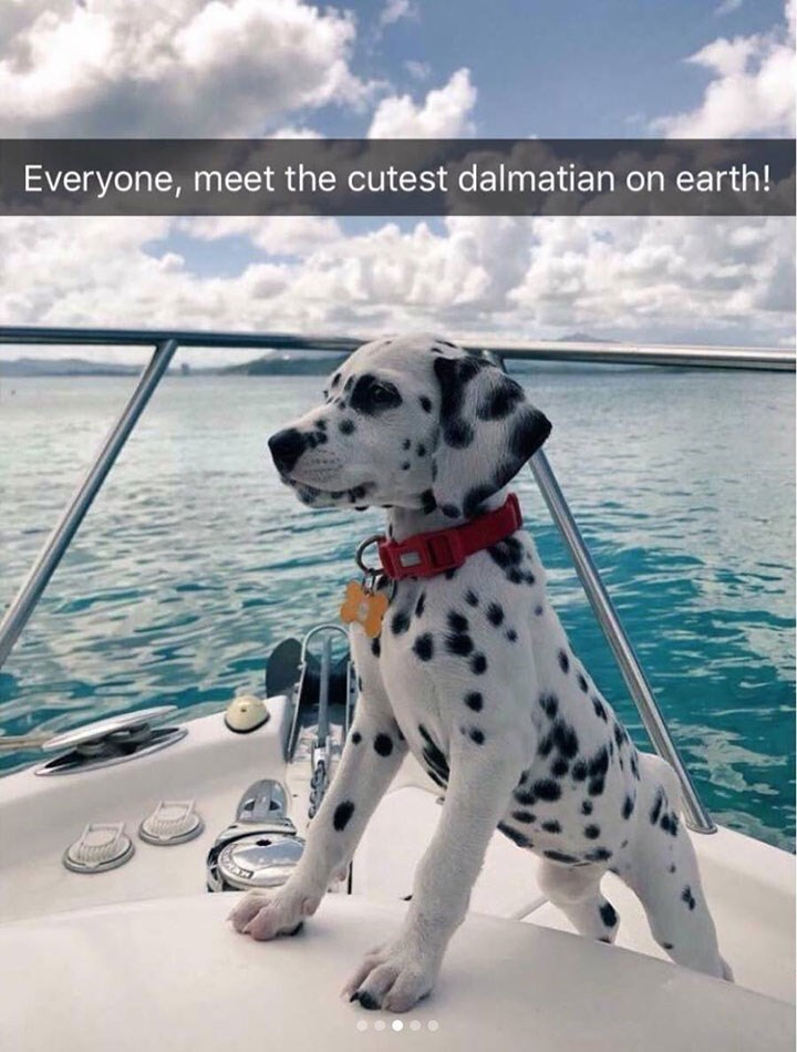 cute snapchat of Dalmatian puppy standing on boat in front of water