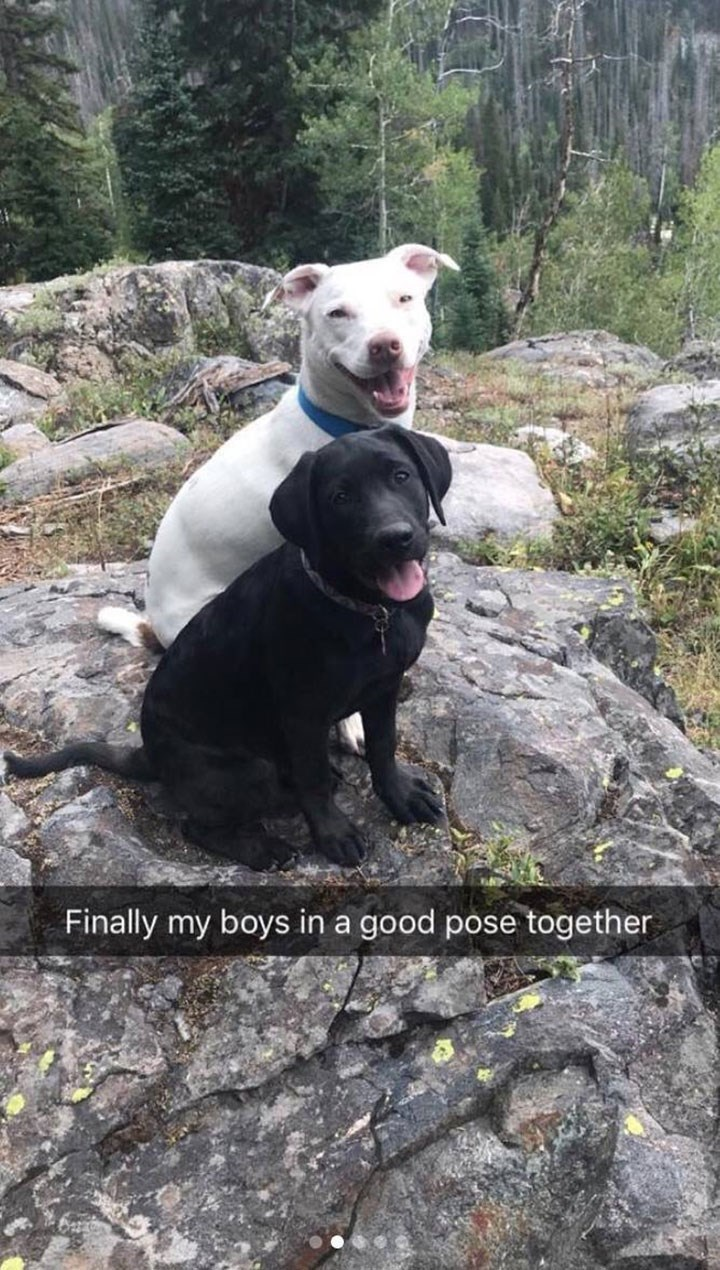 cute snapchat of two dogs posing together on a rock for a picture