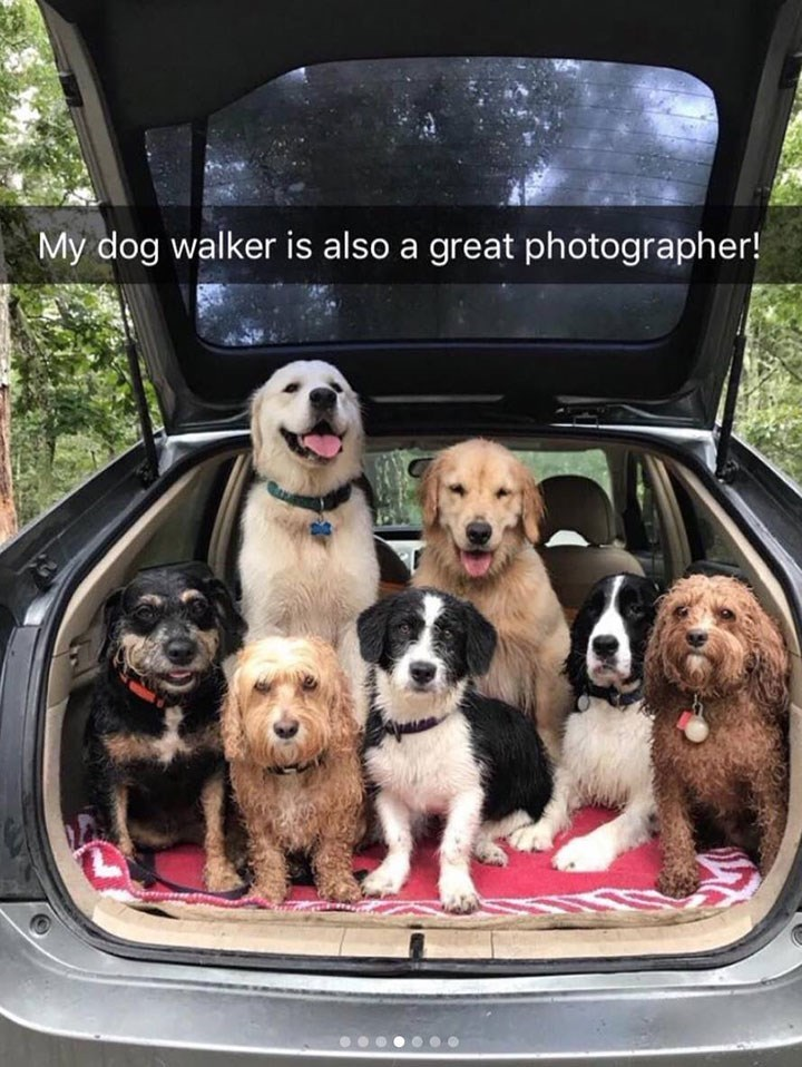 cute snapchat of dogs of different breeds posing together inside the back of a car