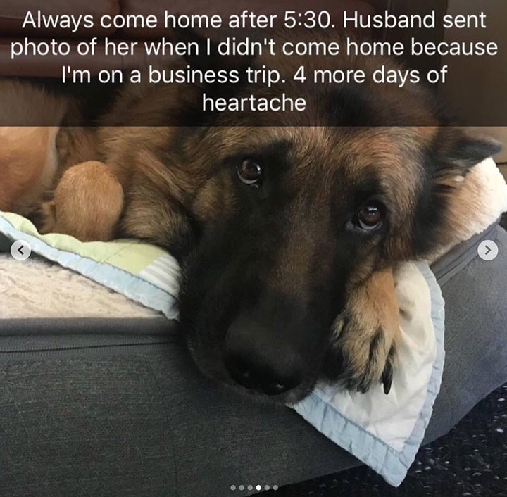 cute snapchat of dog looking sad when its owner went on a 4 day business trip