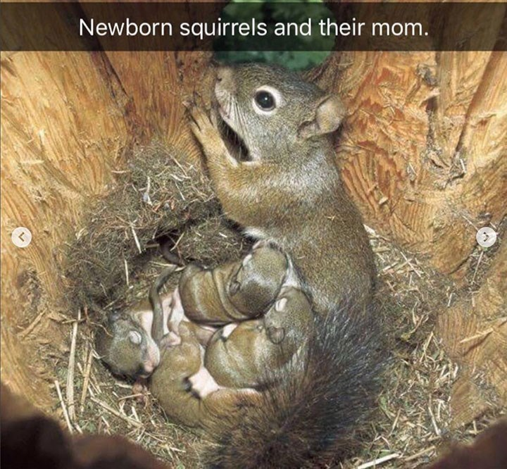cute snapchat of mother squirrel snuggled inside tree with her newborn babies