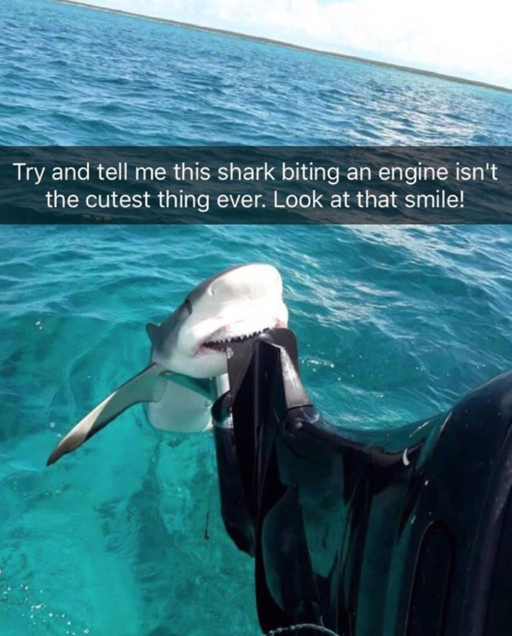cute snapchat of shark biting an engine and appearing to be smiling