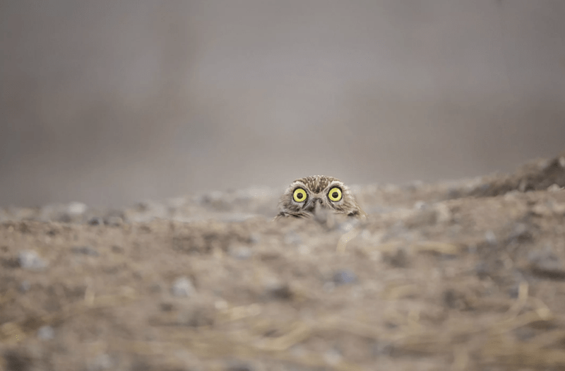 owl peeking out at photographer