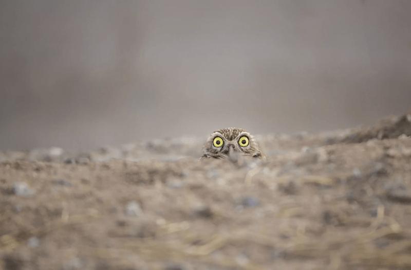 owl peeking out at photographer