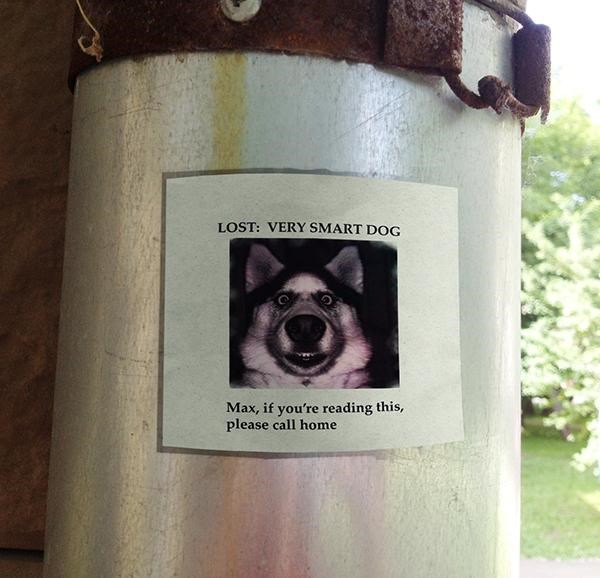 poster funny lost - 9238283008