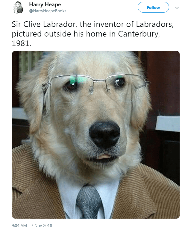 Dog - Harry Heape Follow @HarryHeapeBooks Sir Clive Labrador, the inventor of Labradors, pictured outside his home in Canterbury, 1981 9:04 AM -7 Nov 2018