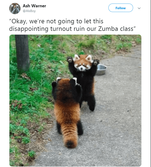 """Red panda - Ash Warner Follow @Als Boy """"Okay, we're not going to let this disappointing turnout ruin our Zumba class"""""""