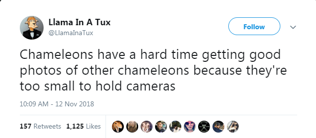 Text - Llama In A Tux Follow @LlamalnaTux Chameleons have a hard time getting good photos of other chameleons because they're too small to hold cameras 10:09 AM -12 Nov 2018 157 Retweets 1,125 Likes