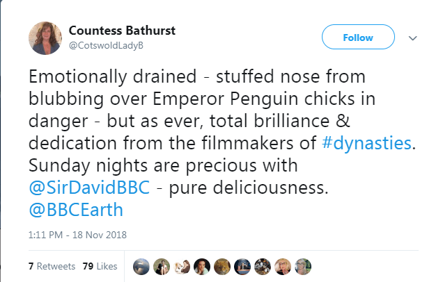 Text - Countess Bathurst Follow @CotswoldLadyB Emotionally drained stuffed nose from blubbing over Emperor Penguin chicks in danger - but as ever, total brilliance & dedication from the filmmakers of #dynasties. Sunday nights are precious with @SirDavidBBC - pure deliciousness. @BBCEarth 1:11 PM - 18 Nov 2018 7 Retweets 79 Likes