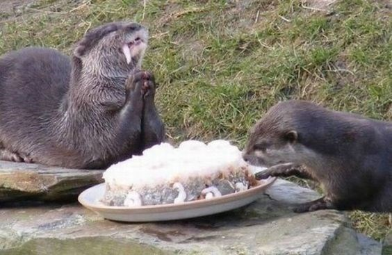 cute animal picture of otters eating fish of a plate with one of them clasping its hands together in glee