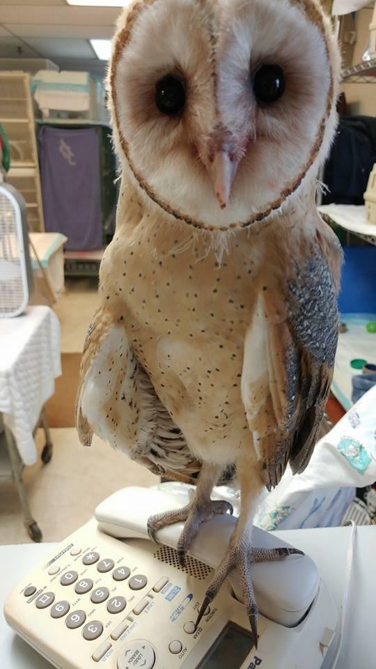 Owl - Pa FUNCTION CLEAR AUTO LOUDA 2UNE L4 1 trOLD DEP ww. OP