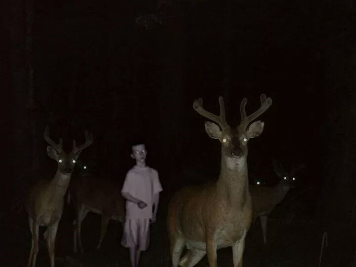 cursed image taken at nighttime of child standing between deer, all staring at the camera with glowing eyes