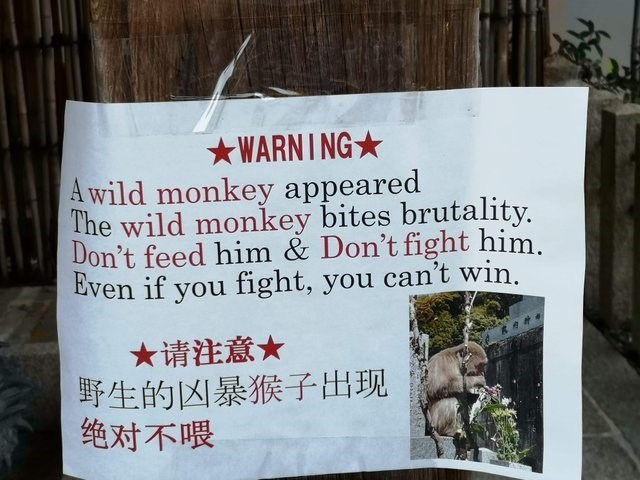 Text - WARNING A wild monkey appeared The wild monkey bites brutality. Don't feed him & Don't fight him. Even if you fight, you can't win. ★请注意★ 野生的凶暴猴子出现 绝对不喂