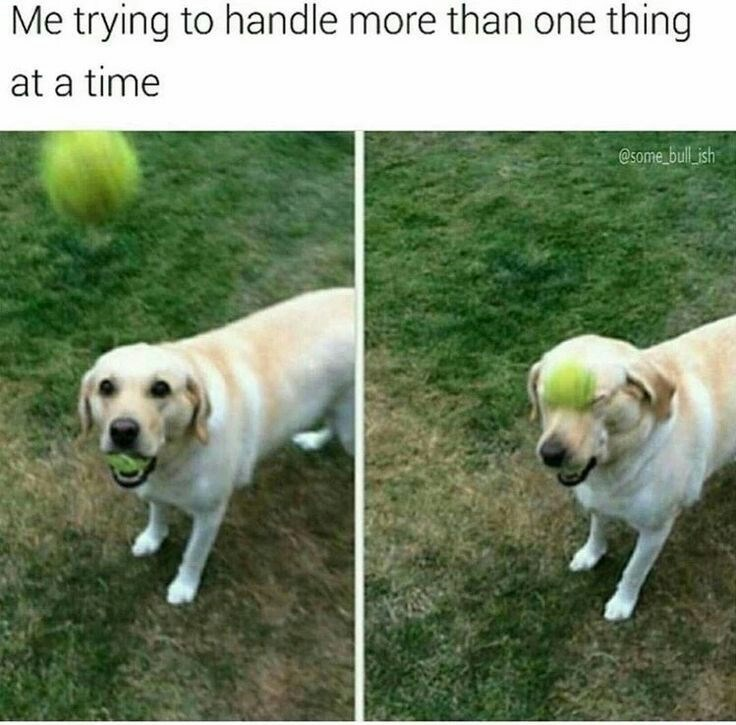 meme about trying to handle several things at once with pictures of dog getting hit in face by tennis ball
