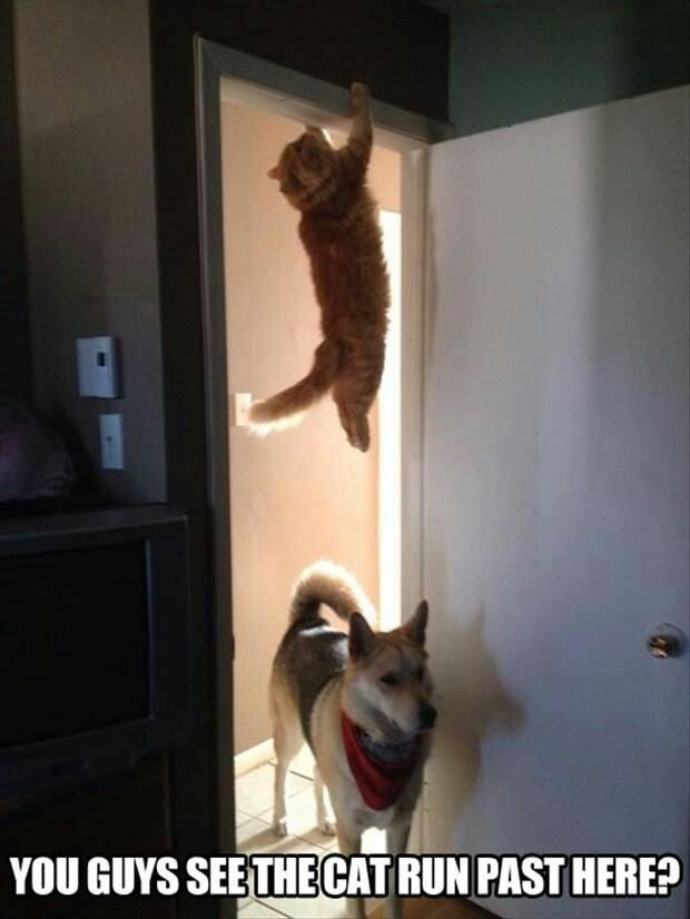 funny picture of cat hiding from dog by hanging from the door frame