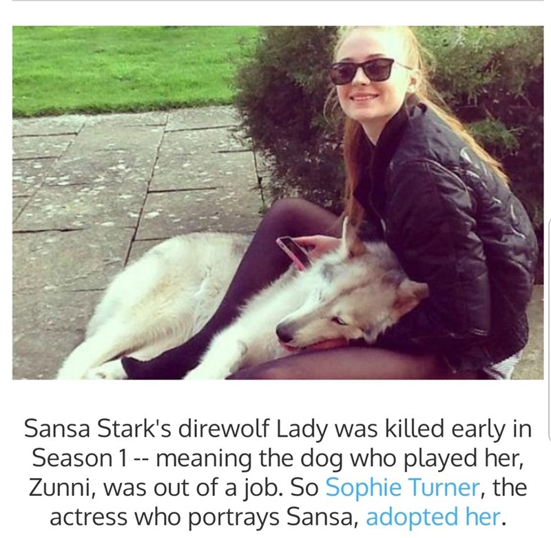 "Text that reads, ""Sansa Stark's direwolf Lady was killed early in season 1, meaning the dog who played her, Zuuni, was out of a job. So Sophie Turner, the actress who portrays Sansa, adopted her"""