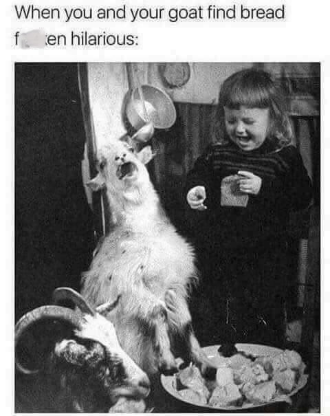 meme of a little girl and a goat laughing at a piece of bread