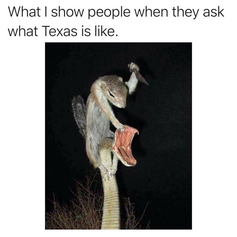 meme about life in texas