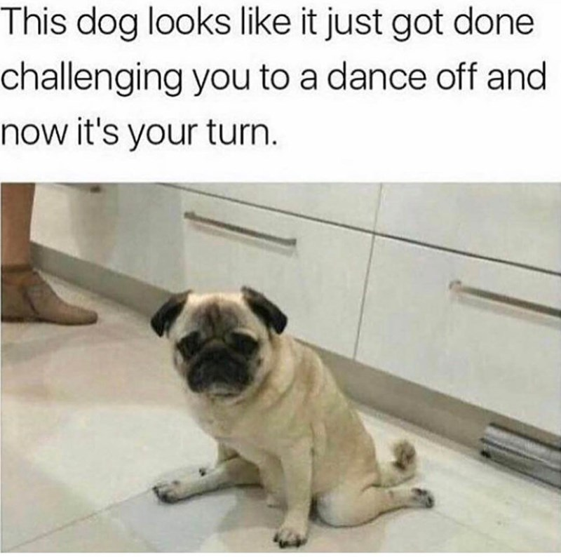 meme about a dog who will challenge you to a dance off