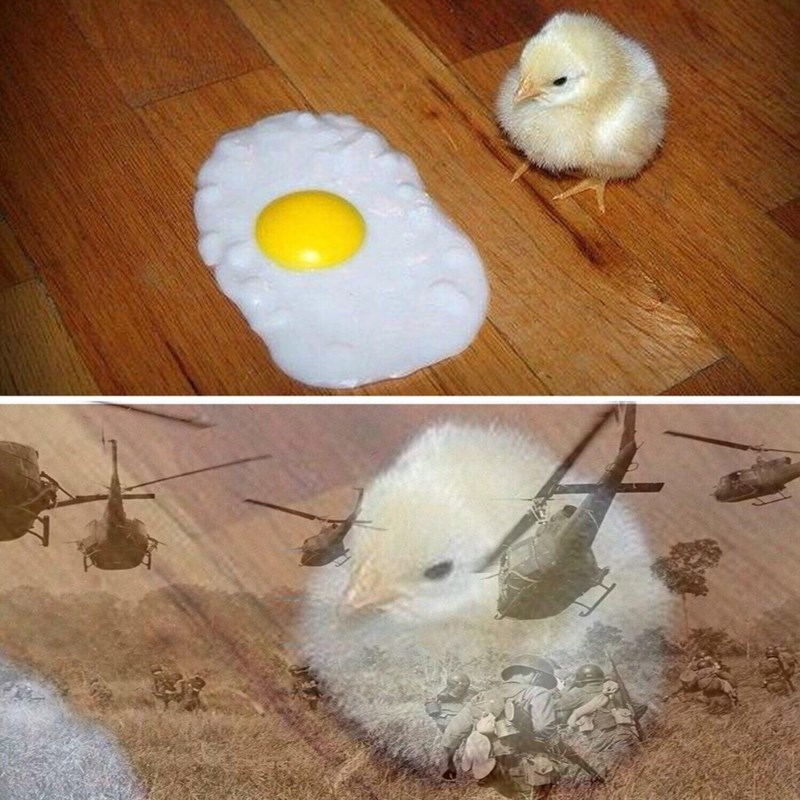 meme about a chick looking at sunny side up egg