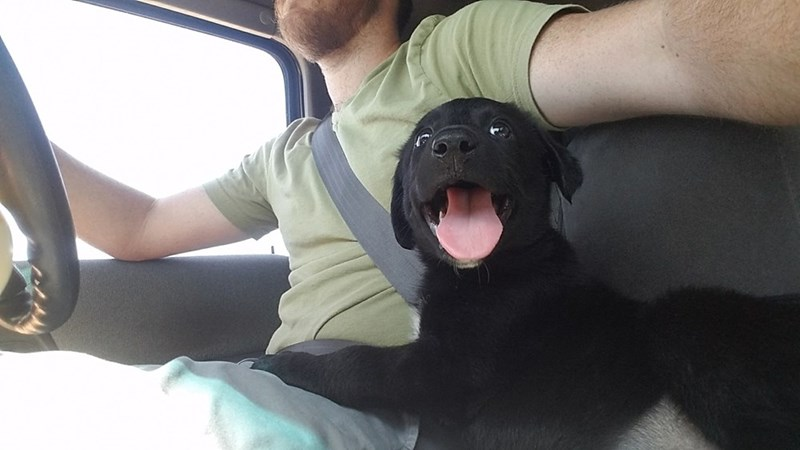 cute animal picture of black puppy excitedly riding in car on owner's lap