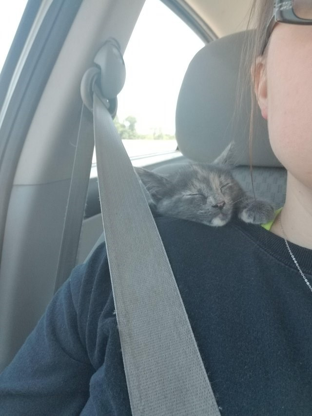 cute animal picture of cat with its eyes closed resting on owner's shoulder on the way home