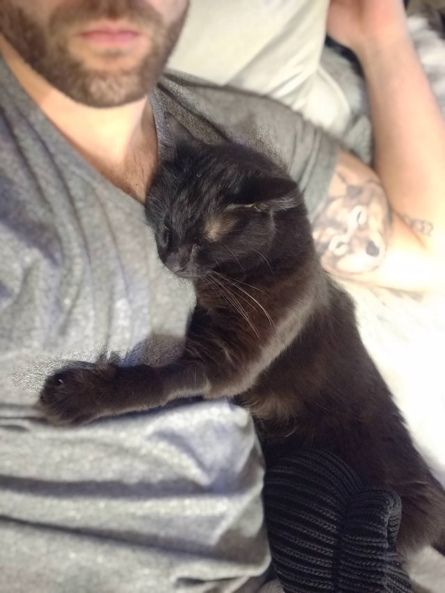 cute animal picture of black cat sleeping cuddled up against owner's side
