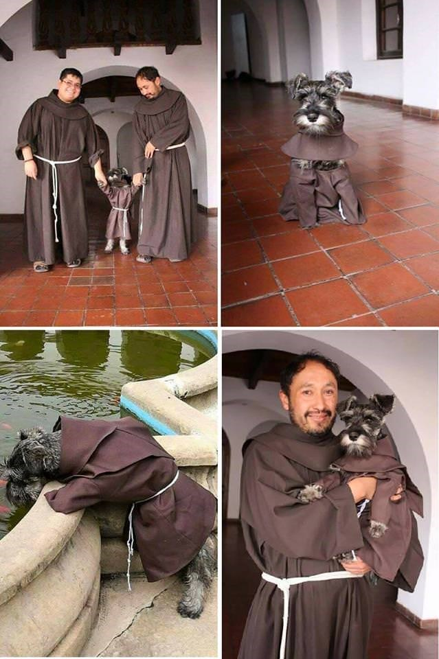 cute animal pictures of dog adopted by monk dressed in robes