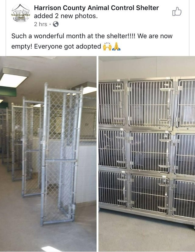 Facebook post from animal shelter announcing all their animals have been adopted