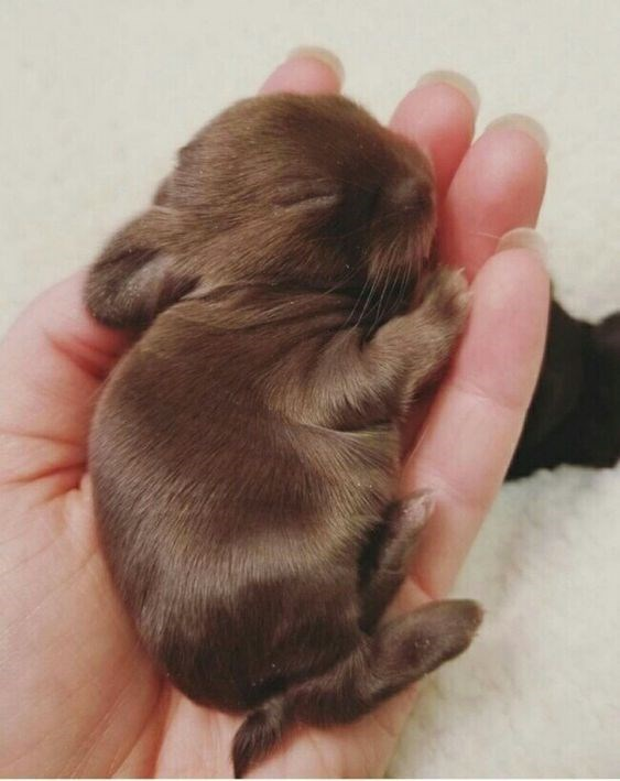 brown bunny on a woman's hand over a blanket