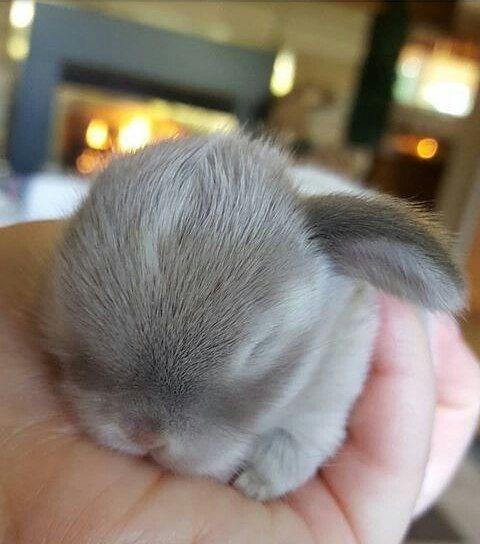 cute sleeping baby bunny