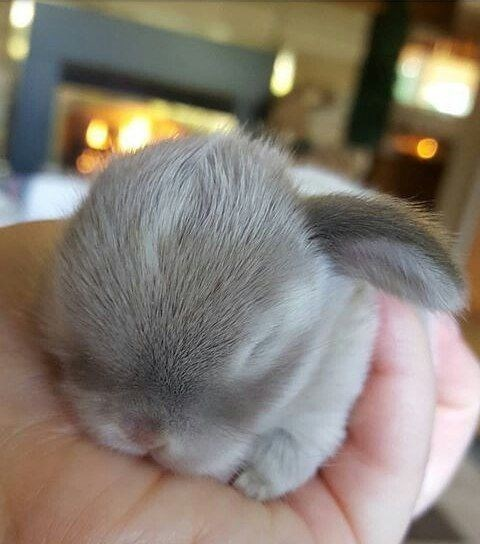 cute sleeping baby bunny