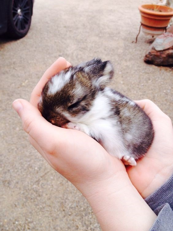 multi-colored bunny sleeping between a persons hands