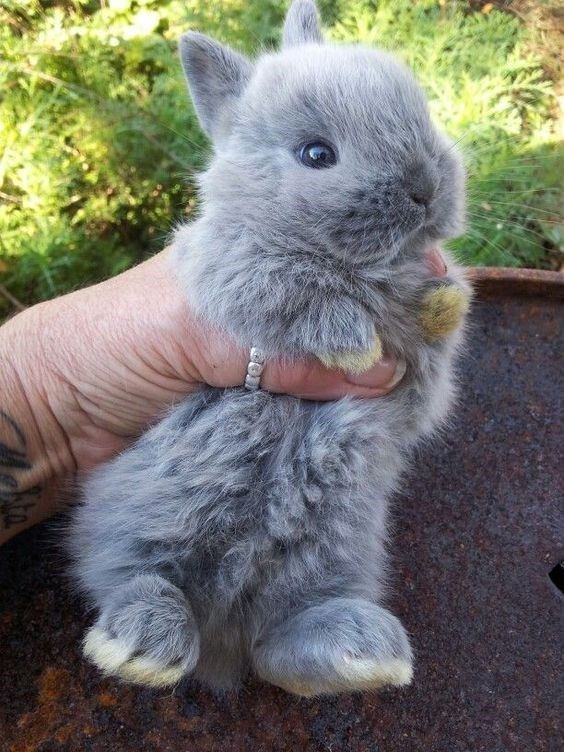 grey furry bunny being held by a persons hand