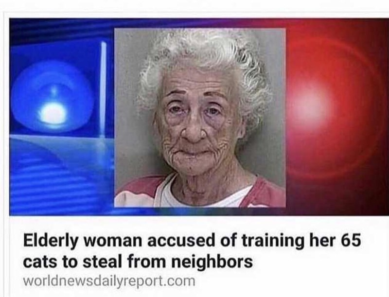 "Headline that reads, ""Elderly woman accused of training her 65 cats to steal from neighbors"" below a mugshot of an old lady"