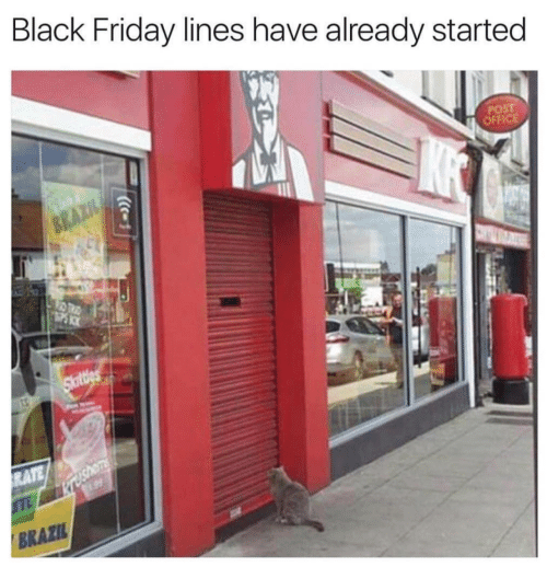 meme about a cat standing in front of a closed KFC