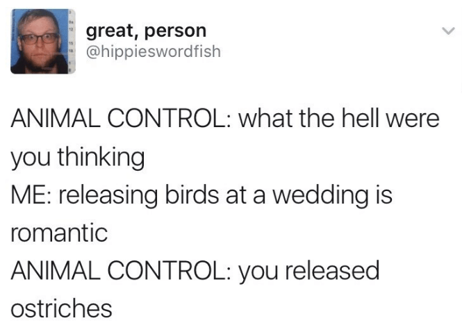 Text - great, person @hippieswordfish ANIMAL CONTROL: what the hell were you thinking ME: releasing birds at a wedding is romantic ANIMAL CONTROL: you released ostriches