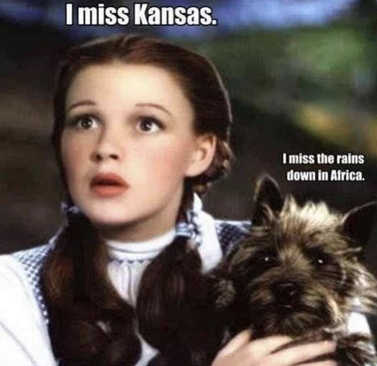 """picture of the dog Toto from Wizard of Oz quoting lyrics from the song """"Africa"""""""
