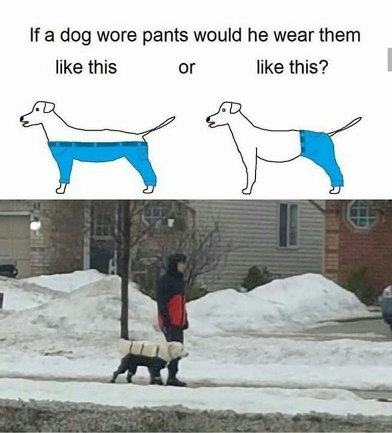 """""""if a dog wore pants"""" meme followed by picture of real life dog wearing pants in the snow"""