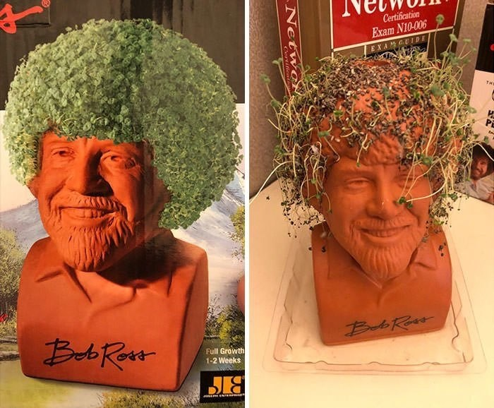 picture of grass head Bob Ross bust that grows its hair sparse and patchy